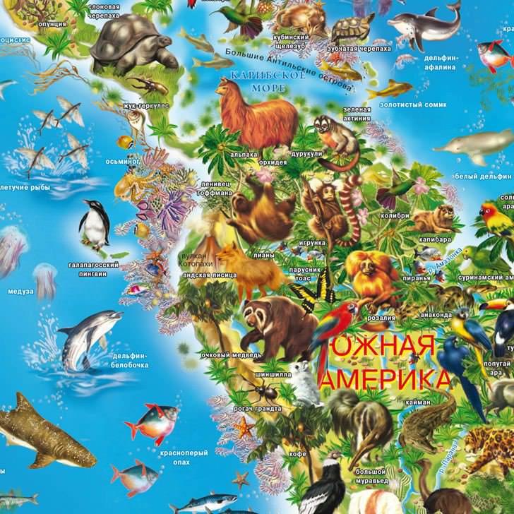 Животный и растительный мир земли
